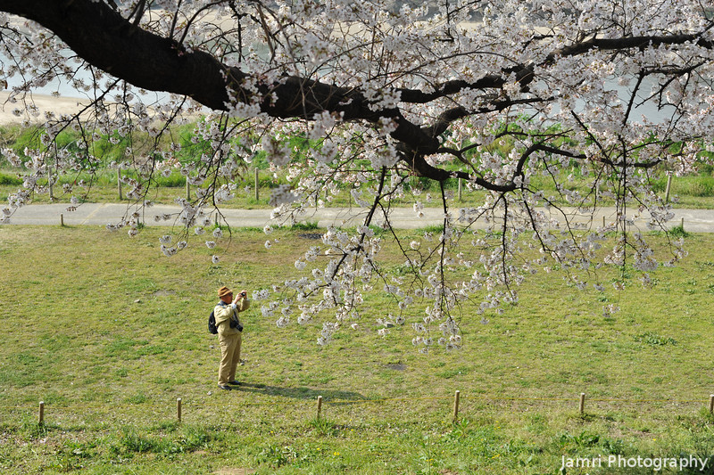 A Sakura branch and a Photographer.