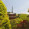 Pagoda and Spring Foliage.<br /> At Mimuroto-ji (a Buddhist Temple), in Uji city, Kyoto-fu, Japan.