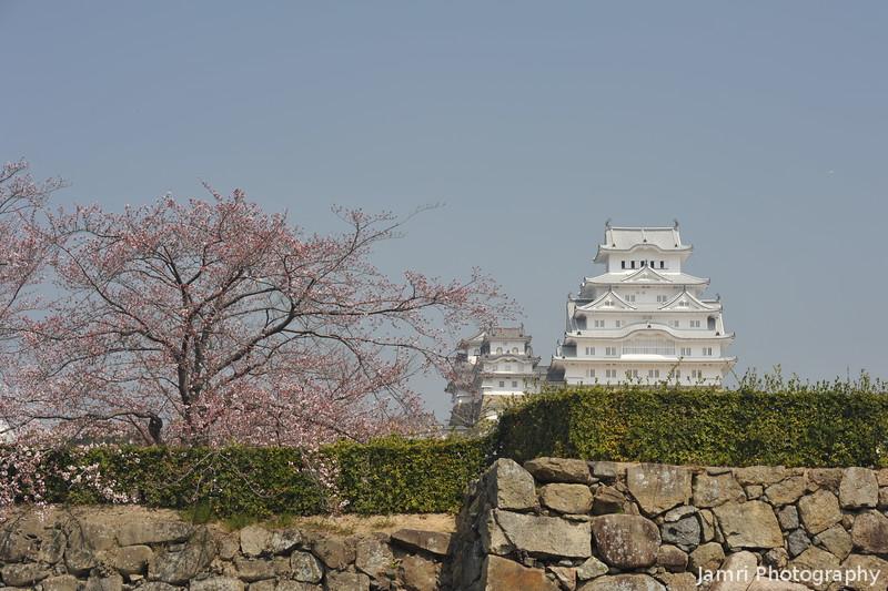 Sakura and Himeji-jo