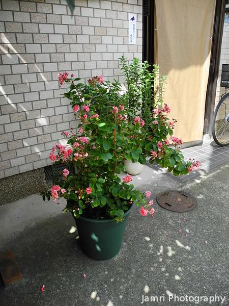 Bob's Plant
