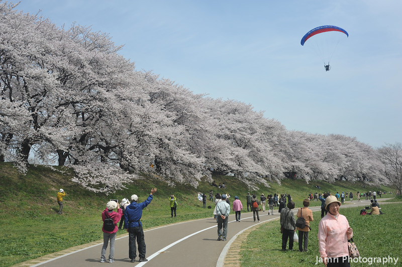A Paraplane Flies Over the Sakura Tunnel.<br /> It must have been a pretty superb view, I hope the pilot was filming it with a GoPro or something.