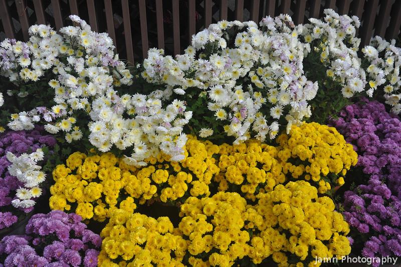 White, Purple and Yellow