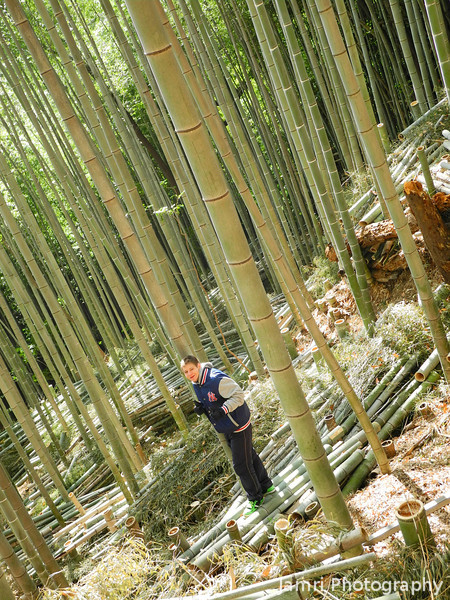 Jayden in a bamboo forest.