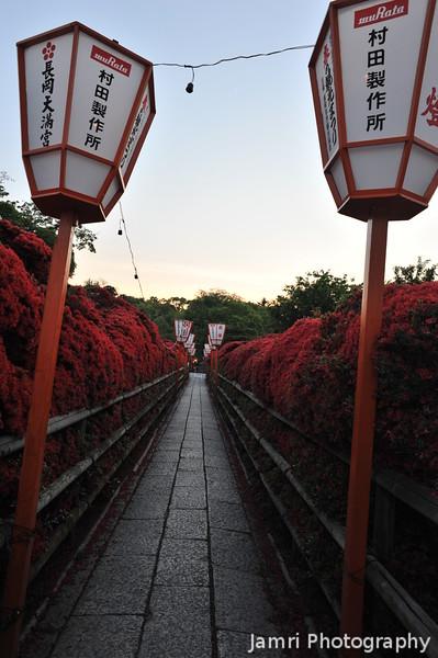 Sunset at the Kirishima Azalea Tunnel