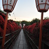 Sunset at the Kirishima Azalea Tunnel