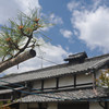 Pine Tree and Temple Accommodations.<br /> At Otokuni Temple in Nagaokakyo, Kyoto-fu, Japan.