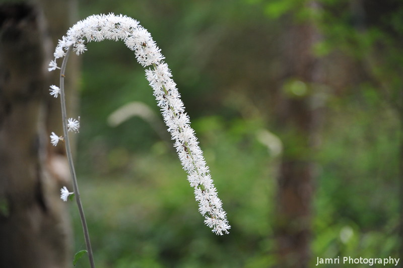 A Tail Like Flower