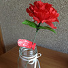 A Carnation for Mothers' Day.