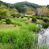 A Little Pond.<br /> In the Nishiyama range, Takatsuki city, Osaka Prefecture.