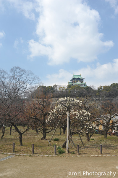 Ume with Osaka Castle in the Background.