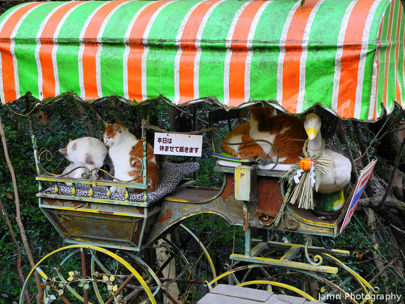 "A Few Cats on an Old Pushcart.<br /> Along ""Tetsugaku-no-michi"" the path of Philosophy, Kyoto."