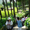 At the Start of the Hydrangea Path.<br /> In the gardens of Mimuroto-ji.