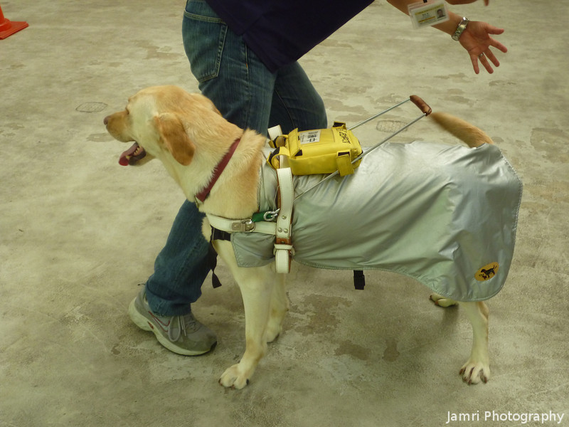 Guide Dog School.<br /> While I was in Perth Ritsuko went to Kameoka to see the guide dog school.<br /> Photo by Ritsuko.