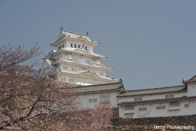 Sakura and Side View