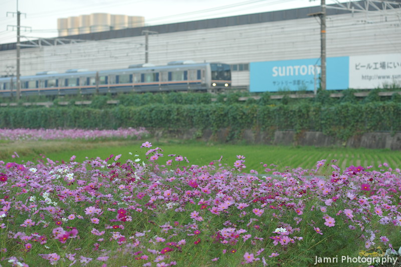 Cosmos and Train