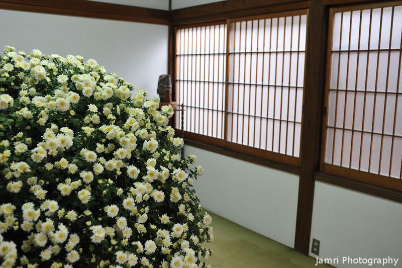 Regular Chrysanthemums