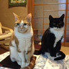 Lucy and Linus on the Coffee Table.