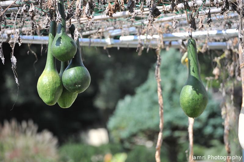 Dangerous Hanging Garden