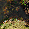 A Couple of Crabs buy the Water.<br /> Well Mandurah is the place to catch them and there were plenty around, but all undersized.<br /> Best viewed at large size.