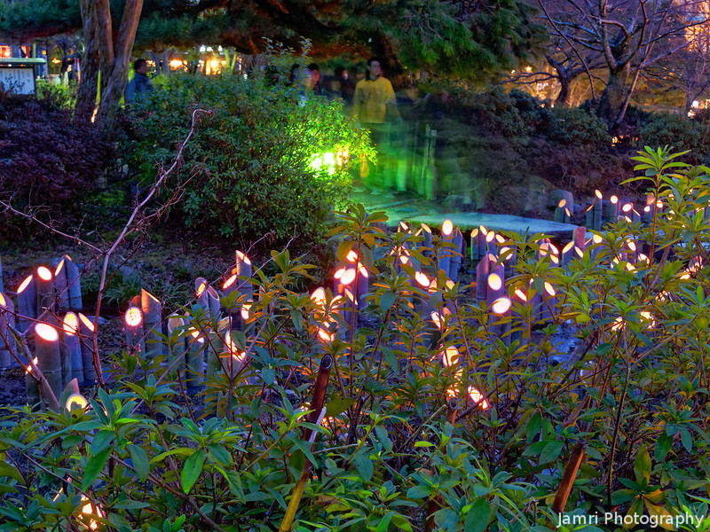 The Bamboo Light Stream