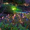 The Bamboo Light Stream