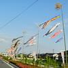 Koi Banners Along the Path