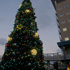 Christmas Tree and Part of Bambio Building