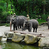 Elephants and Marmouts.<br /> At the Singapore Zoo.