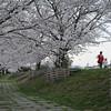 Walking by the Sakura.