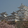Sakura Below the Keep