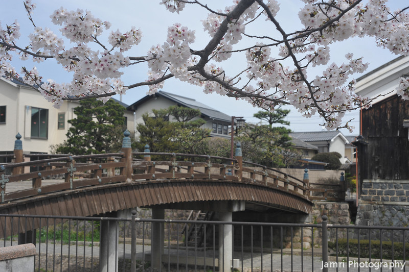 Sakura and an Old Bridge.<br /> In Yawata city, Kyoto-fu, Japan.