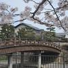 Sakura and an Old Bridge.<br /> In Yawata city, Kyoto-fu, Japan.