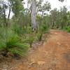 Jarrah-Marri Forest