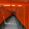 On the Torii Path