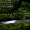 A Stream by Night.<br /> If you view at large size and look very carefully you might spot a firefly.
