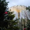 Interesting Tree Decoration.<br /> In Omi Hachiman, Shiga Prefecture, Japan.