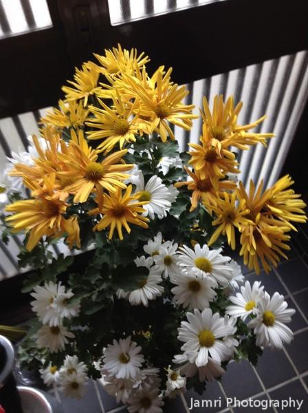 Chrysanthemums in the Entryway
