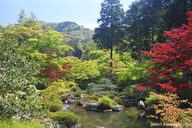 The Koi Carp Pond.<br /> At Mimuroto-ji (a Buddhist Temple), in Uji city, Kyoto-fu, Japan.
