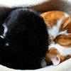 Snug as two bugs...<br /> Linus and Lucy squeeze into the cat bed which is really only meant for one.