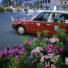 Azaleas and a Taxi Cab.<br /> The reason the taxi has a flag attached to the front is that it's the Showa Day public holiday. Showa day commemorates the previous emperor, the last 3 decades of his reign were a time of great prosperity for Japan.