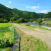 Along the River.<br /> In Miyama-cho, Nantan-shi, Kyoto-fu, Japan.