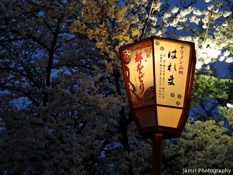 A lantern and some sakuras.