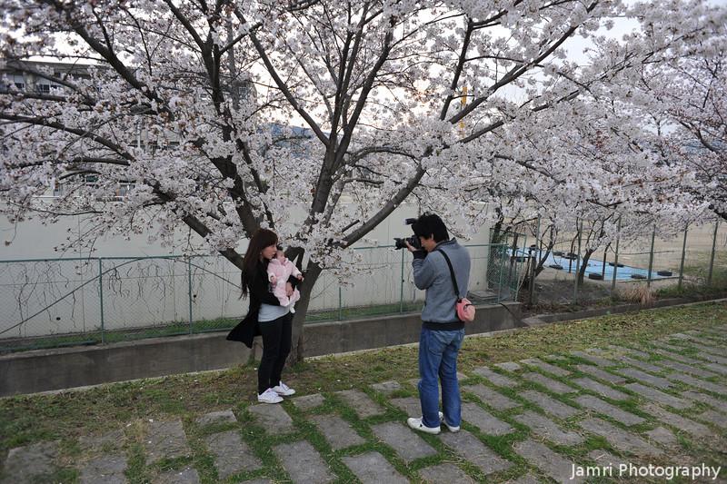 Baby's First Sakura.<br /> Nagaokakyo, Kyoto-fu, Japan.