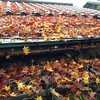 Leaves on Rooftop