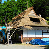 Re-thatching the Roof.<br /> Traditional Japanese houses with thatched straw roofs, need to be re-thatched every 20-30 years. Now-a-days in Miyama-cho, Kyoto-fu (were this house is) there is no longer anyone with the skills to do this, so the workers to re-thatch the roofs come from Toyama prefecture, where there are a lot more of these kind of houses. This is the first of my pictures I took just after my return to Japan that I'm posting to this gallery.