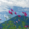 Cosmos and Mountain