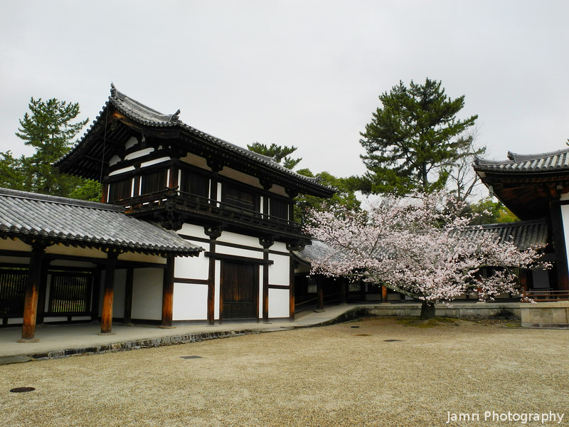 Sakura Tree in the Grounds of Houryu-ji.<br /> Ikaruga-cho, Ikoma-gun, Nara-ken, Japan.