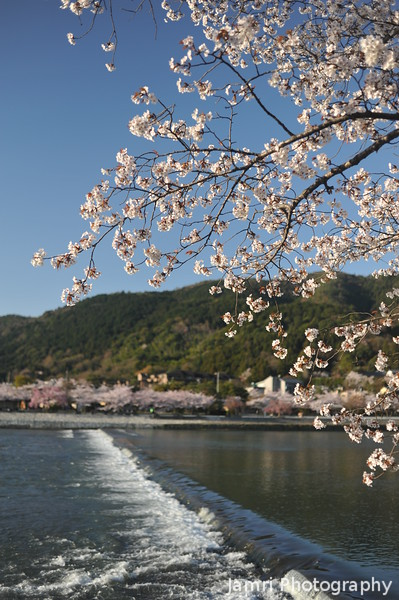 The Sakura and the River