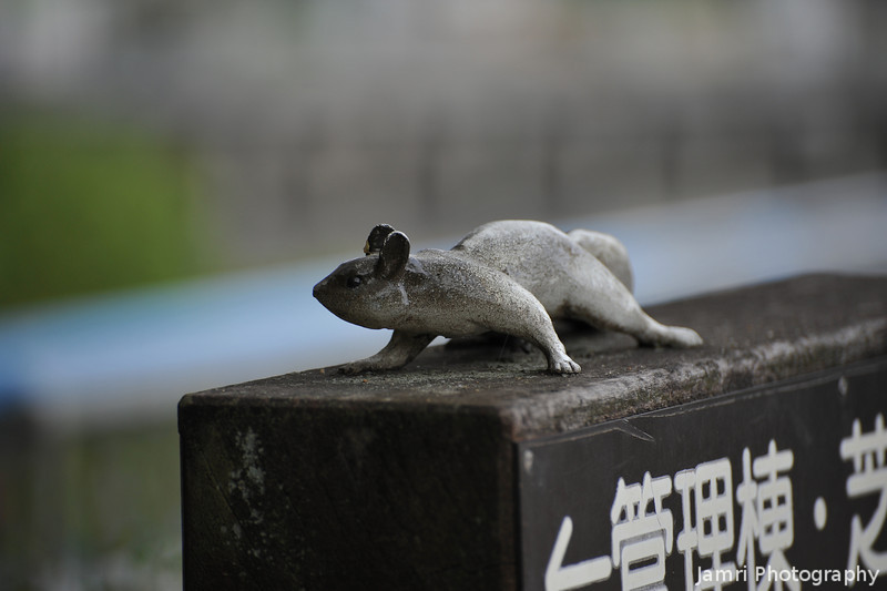 A Squirrel Statute
