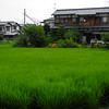 Green Field and Japanese House